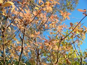 A sunny bright autumn day