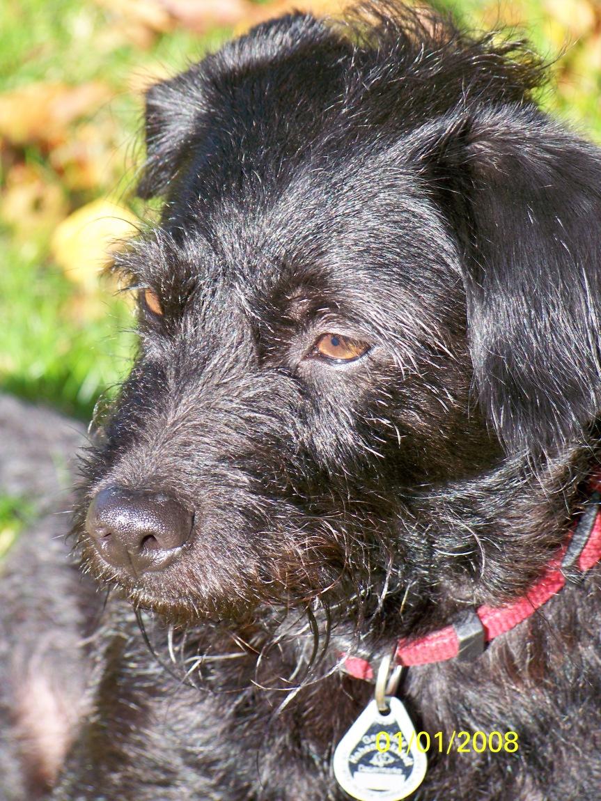 Rudi, our neighbour