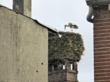 Kellinghusen's spring messenger